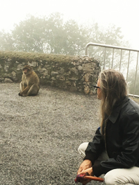 Chumming with monkeys